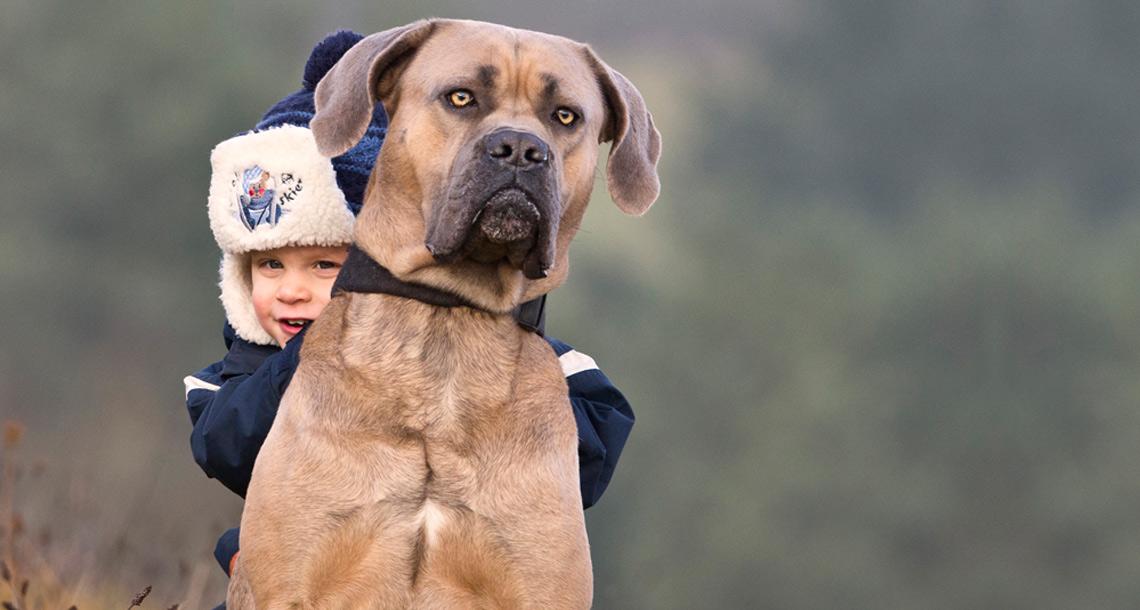 Lennox und Familienhund Djego