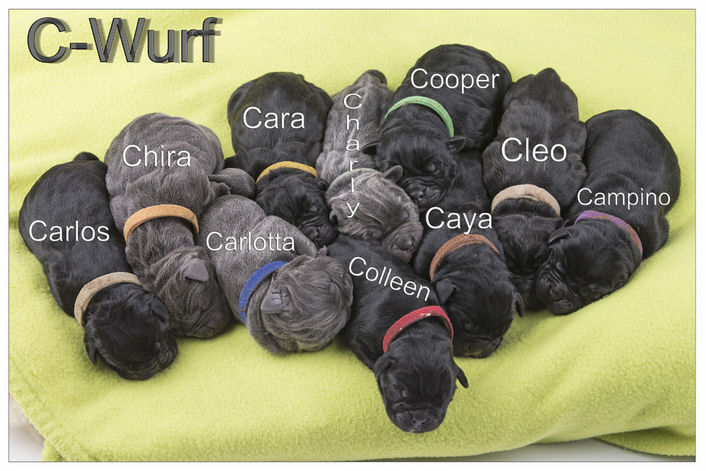 C-Wurf 001